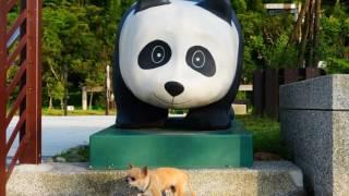 吉娃娃東東--臺北市木柵動物園單車行(05-14-2016)