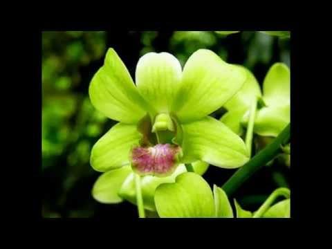 Экзотические цветы (фотографии).Часть 2