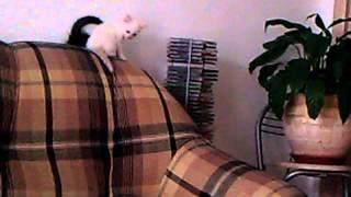 ТЮМЕНЬ - Тайские котята - ОТДАМ в Добрые РУКИ! Звоните!