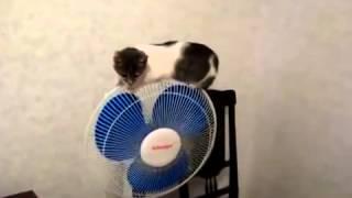 Как бестолковый кот грохнулся с вентилятора