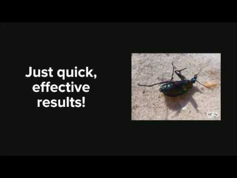 Best Waterbug Control in Grand Prairie | 817-617-8010 | FREE ESTIMATES