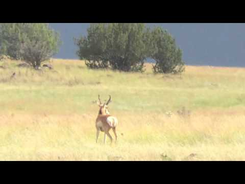 Arizona Archery Antelope: Slow Walks and Fast Goats