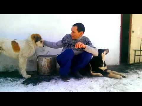 Разное в Атырау — поиск объявлений на сайте Ак Жайык