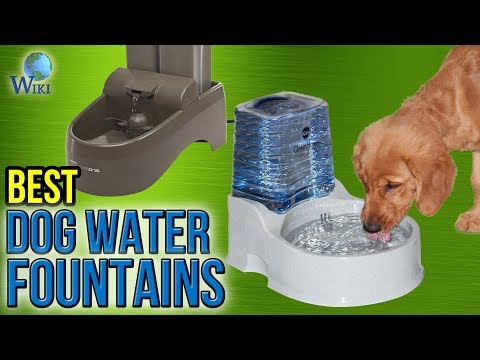 download 10 Best Dog Water Fountains 2017