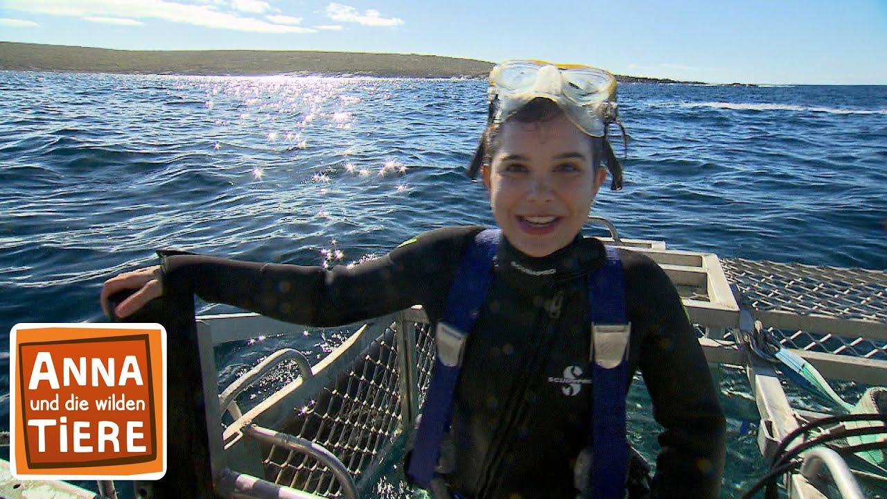 Mit Dem Hai Unter Wasser Doku Reportage Fur Kinder Anna Und Die Wilden Tiere Youtube