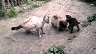 Борьба собаки и кота