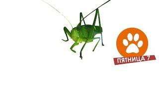 ✅ Зеленый кузнечик / Забавные животные