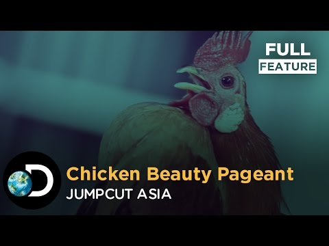 Chicken Beauty Pageant Full Feature | JumpCut Asia