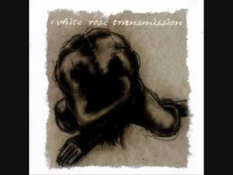 White Rose Transmission ~ Sister Sweetness