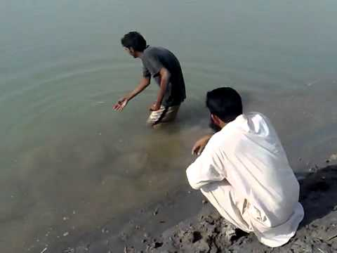 fishing in pakistan indus river bhakkar (By farooq azam shibly my friend) oct-2009.mp4