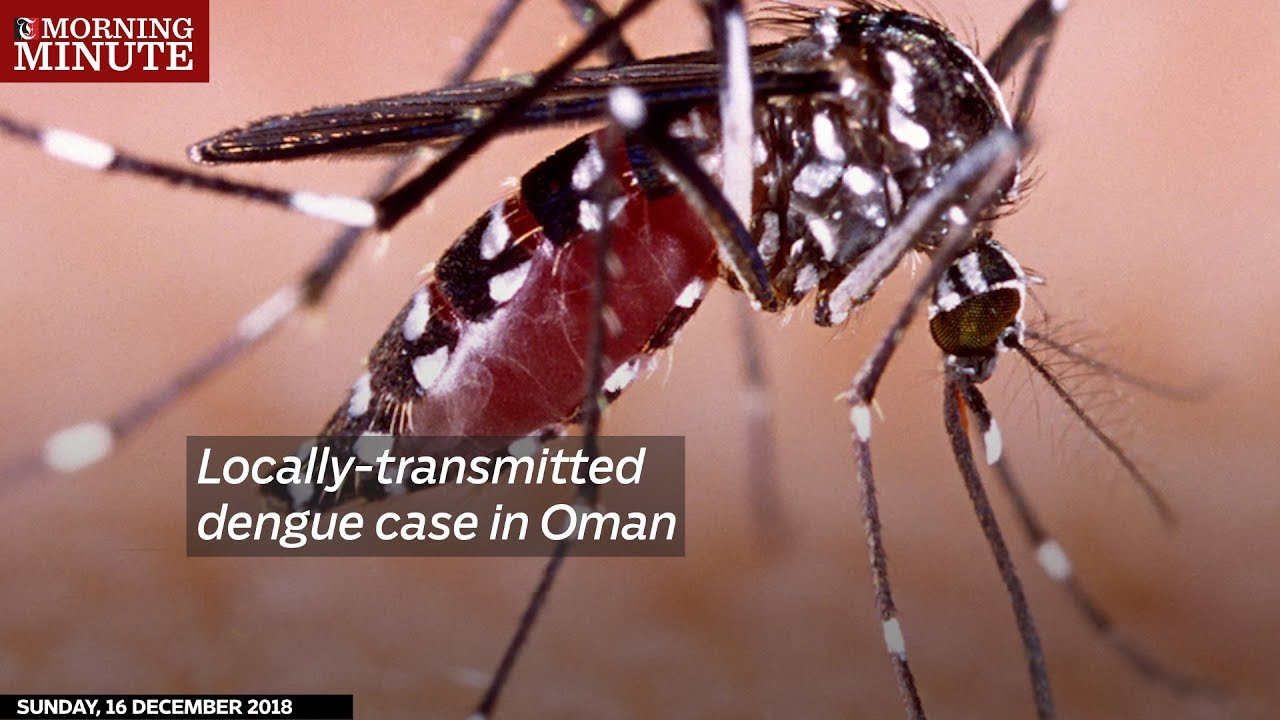 Oman reports locally transmitted dengue - Outbreak News Today