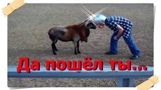 Бой остервенелых животных и людей.