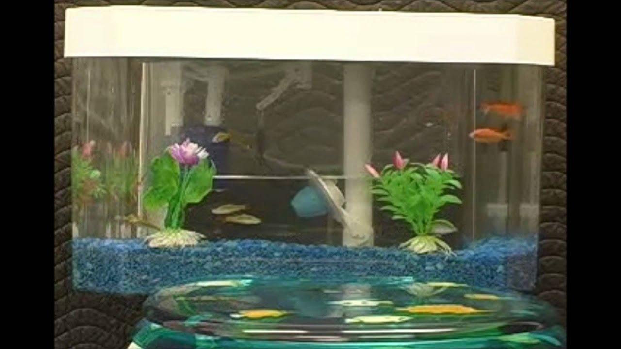 Fish tank toilet - Fish N Flush Toilet Aquarium