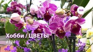 164#124 / Хобби Цветы / 05.2019 - OBI (ХИМКИ). ОБЗОР