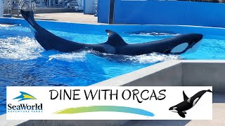 Dine With Orcas SeaWorld Orlando 2021 | Upclose Killer Whale Experience