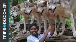 Discover Seacrest Wolf Preserve In Florida