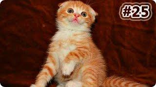 Смешное Видео Про Кошек 2016 (#25) Лучшее Смешное Видео Про Кошек/