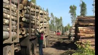 Усть-Илимск. День работников леса-2012.