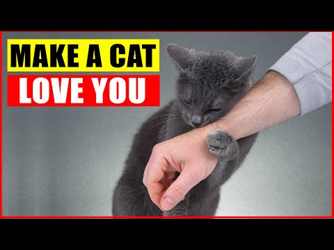 10 Scientific Ways to Get a Cat to Like You