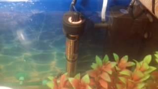Установка обогревателя в аквариум!