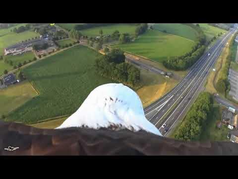 Лучшие кадры с высоты птичьего полёта или Орлиный дайвинг