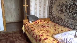 Кошка (Софа) ложится спать