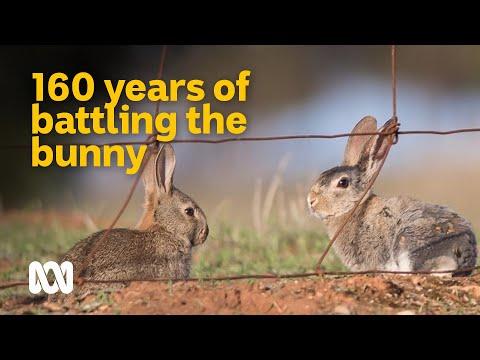 160 Year Battle Against One Of Australia's Worst Invasives 🐇 | Meet The Ferals Ep 6 | ABC Australia