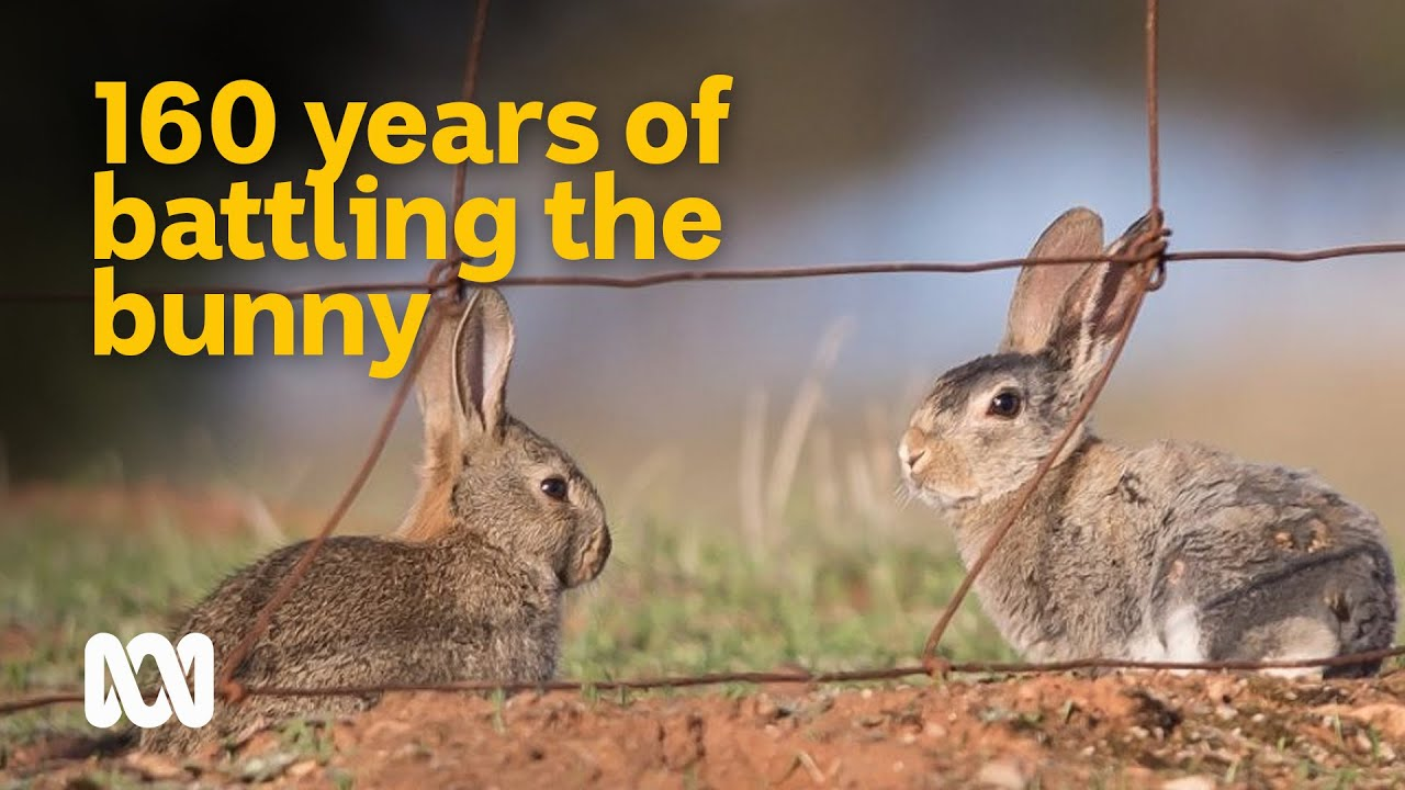 The 160 year battle against Australia's worst invasive ? | Meet the Ferals | ABC Australia