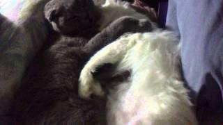 Чистая любовь бывает и у животных