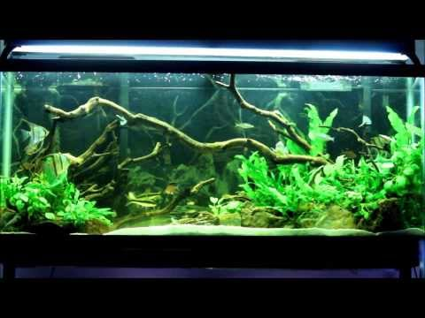 55 Gallon Planted Tank - 2 years in 2 Minutes