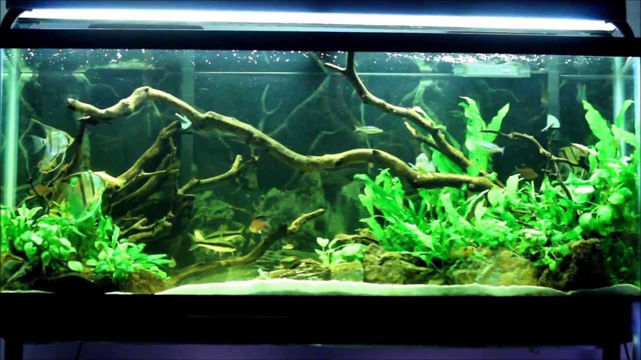 55 Gallon Planted Tank  2 years in 2 Minutes  YouTube