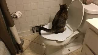 Toilet Trained Cat using The Purrfect Potty! AWESOME! SO EASY!