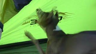 Kermit goes crazy over a fly - edit thumbnail