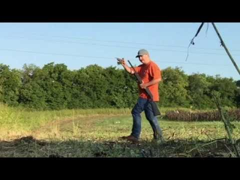 Dove Hunting Public Land