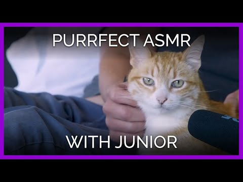 ASMR | Have You Ever Heard A Cat Purr Like This?