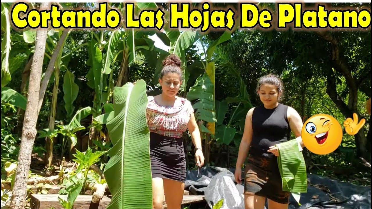 -Nos Fuimos A Cortar Las Hojas De Plátano Para La Preparación De Las Riguas 😋🌽-P3