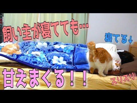 寝ている飼い主に甘えまくる猫達を隠し撮りしてみたwww