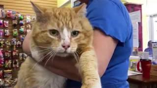 Big, Orange Cat!