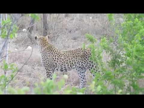Kruger Park South Africa Oct/Nov 2017