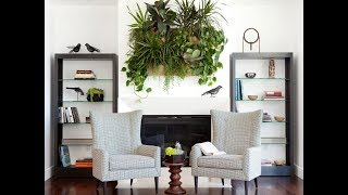 видео Ампельные растения и лианы для сада