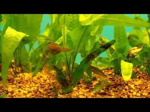 Why Is Algae Good For Your Fishtank - Good Or Bad?