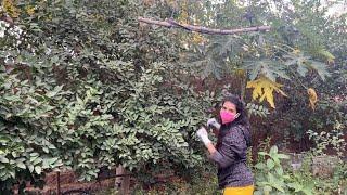 My Garden Tour... Charu Asopa Sen