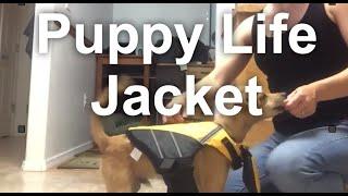 Puppy Kayak Training Part 1: Life Jacket