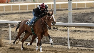 Excitement building in Alberta's horse racing community for historic first race at Century Mile