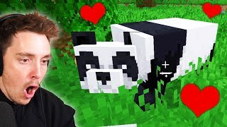 I tamed a PANDA in Minecraft