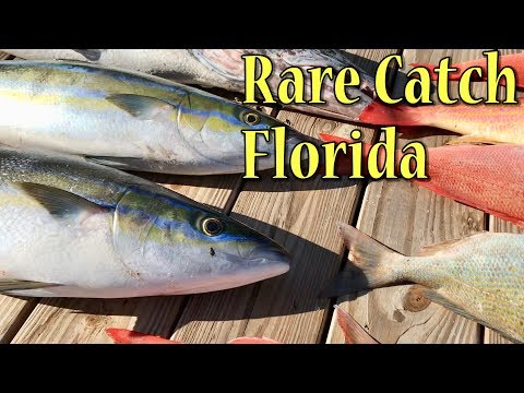 Rare Offshore Catch for our Area in Florida