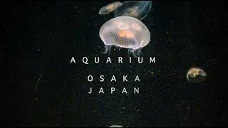 Musical Aquariam Experience - Osaka Aquarium Kaiyukan JAPAN