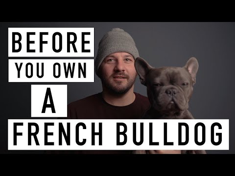 BEFORE YOU OWN A FRENCH BULLDOG