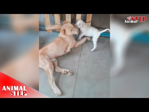 Three Legged Dog Slept Waiting to Die After Being Dumped by Former Owner – Watch Until The End!