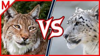 Lynx vs Snow Leopard ANIMAL BATTLE (Hippo vs White Rhino winner)